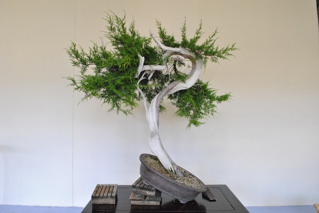 bonsai for dad - Magazine cover