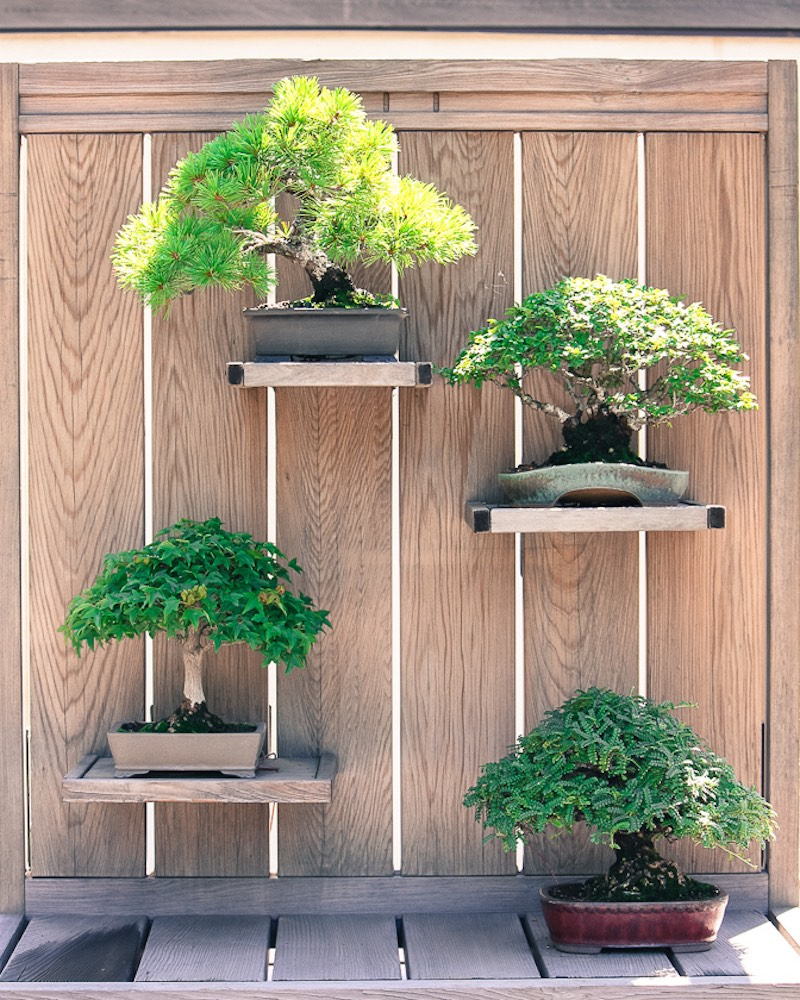 Bonsai Garden Design Bonsai Empire