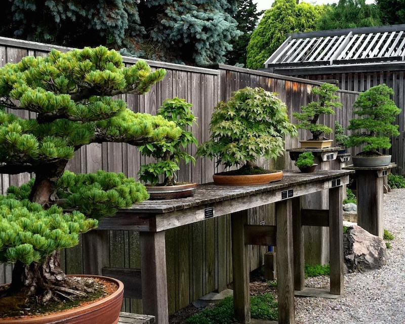Backyard Bonsai Garden : Bonsai Garden Backyard bonsai garden design  bonsai empire