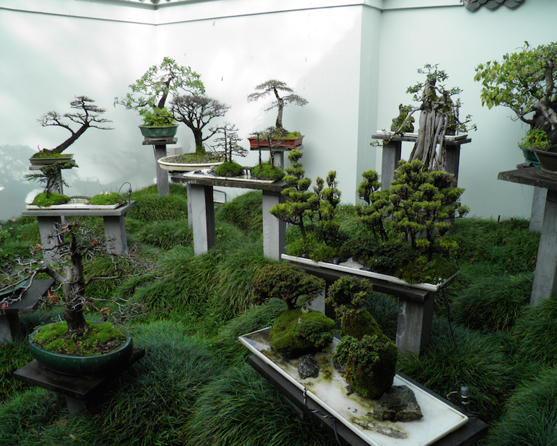 Backyard Bonsai Display : Bonsai garden design  Bonsai Empire