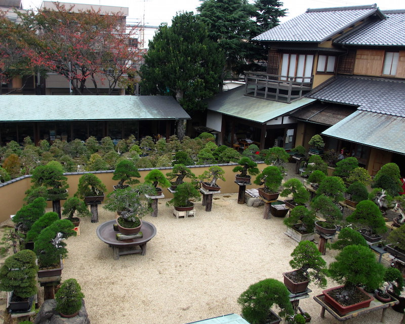 Bonsai Garden on small patio gardens