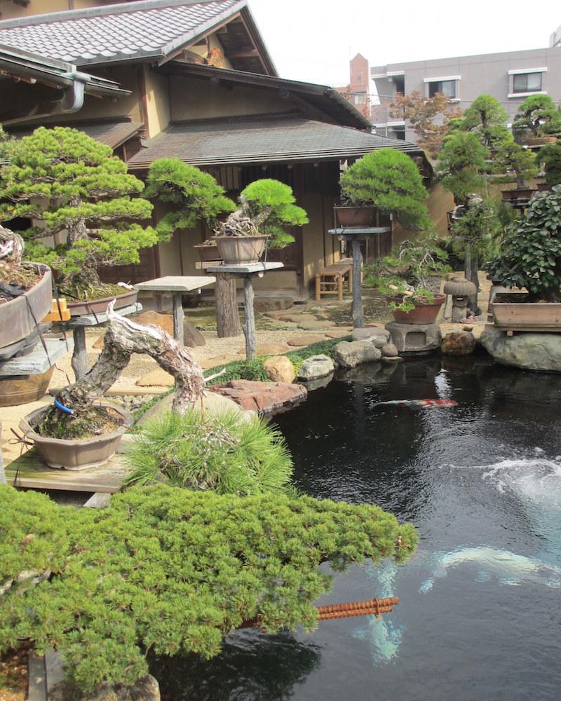 Bonsai garden design bonsai empire for Japanese garden koi