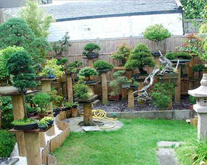 Backyard Bonsai Trees : Bonsai garden design  Bonsai Empire
