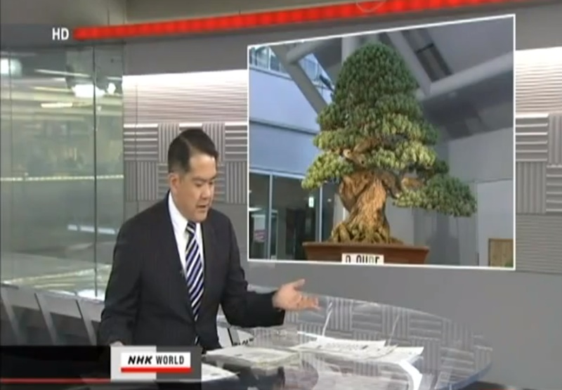 Most expensive bonsai tree try 1 3 million dollar bonsai for Most expensive bonsai tree ever