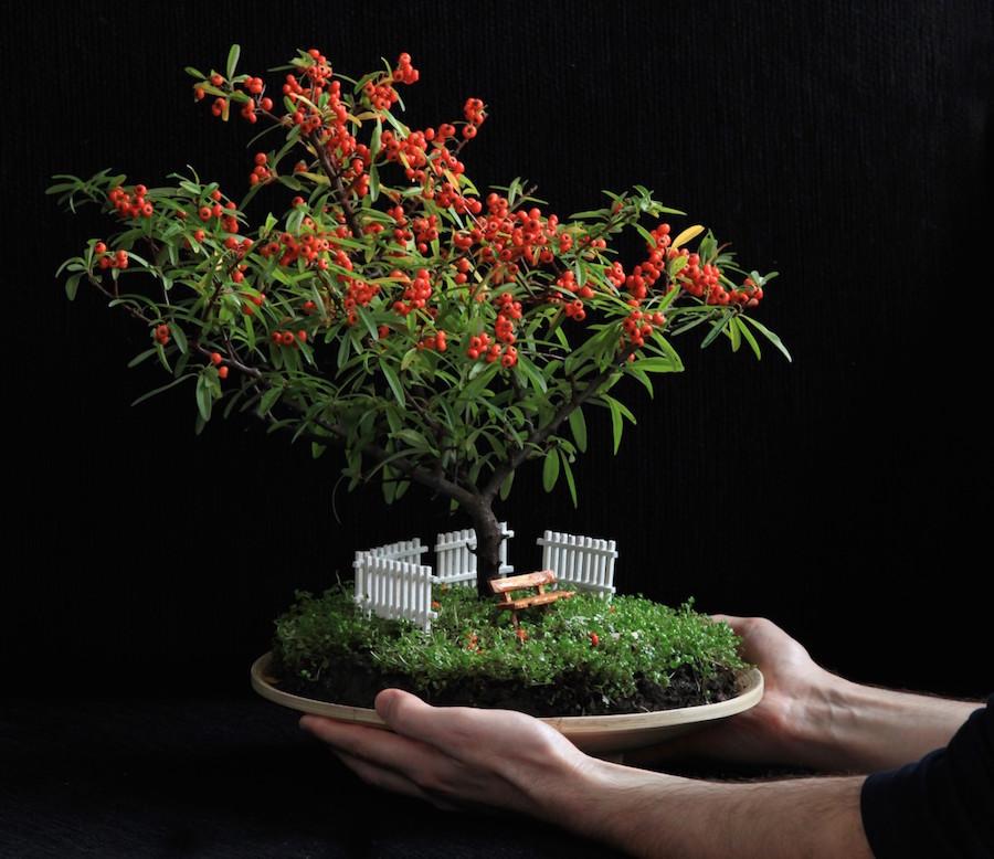 Miniature Bonsai Gardens