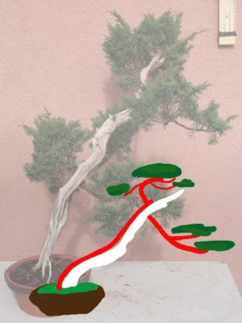 Option 1 literati bonsai