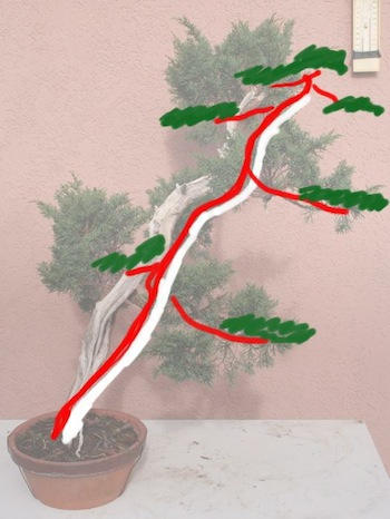 Option 2 bonsai