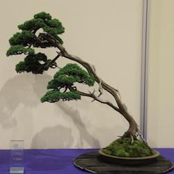 How a samurai became bonsai literati style bonsai empire for Literati bonsai gallery