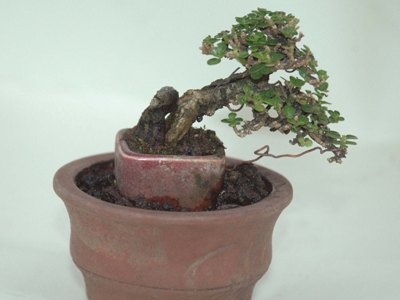 Bonsai placement 2