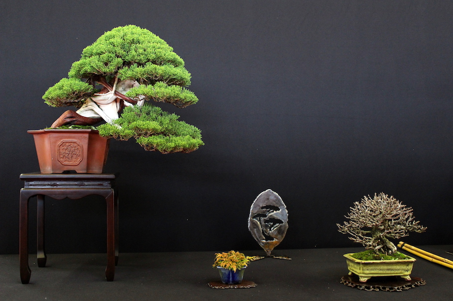Bonsai Trees in San Antonio, TX with Reviews - YP.com