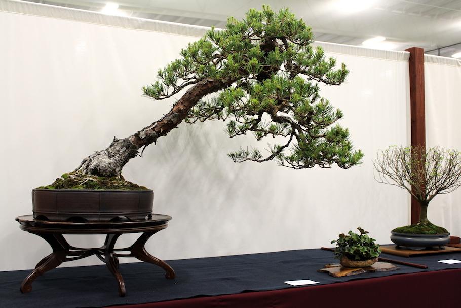 the 5th us national bonsai exhibition bonsai empire. Black Bedroom Furniture Sets. Home Design Ideas