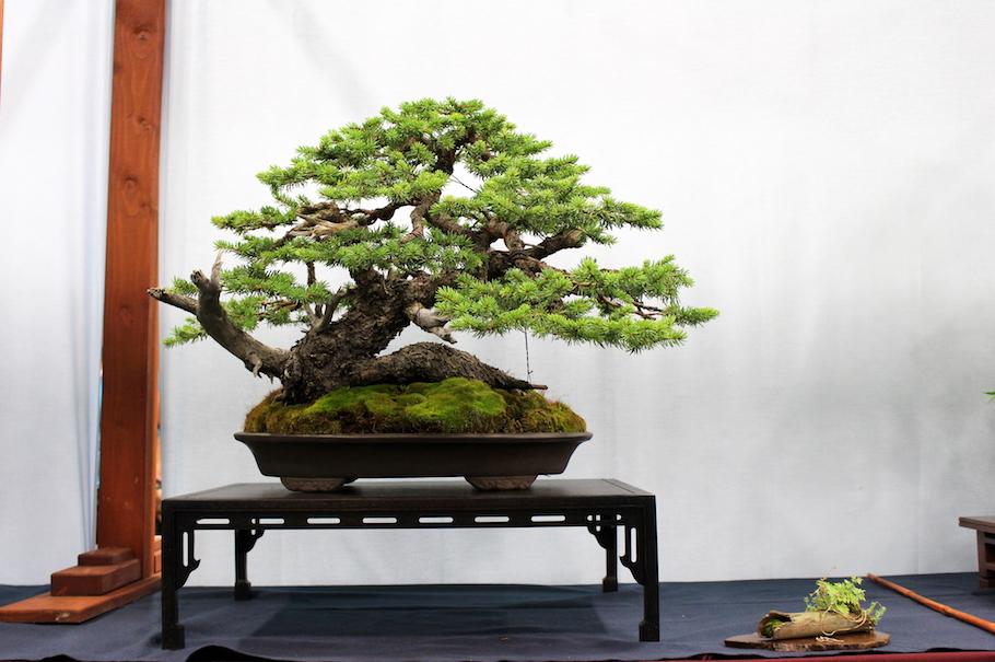 The 5th US National Bonsai Exhibition - Bonsai Empire