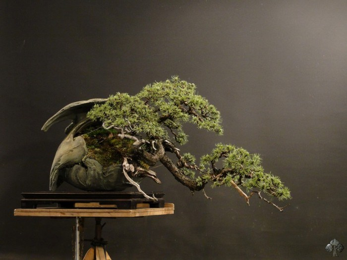 Pavel Slovak Bonsai Empire