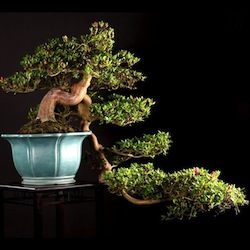 Bonsai movie