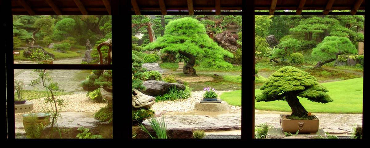 Japanese bonsai garden