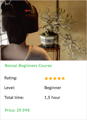 Bonsai beginner course