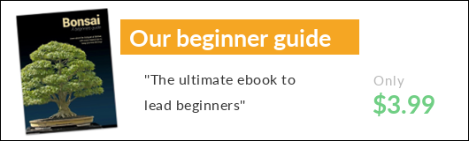 Bonsai beginners guide ebook