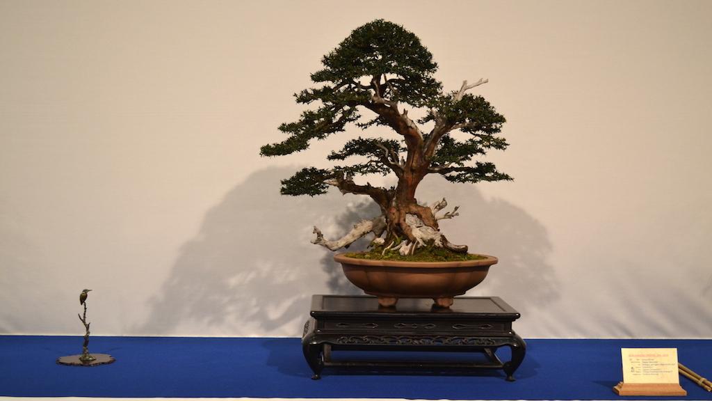 Noelanders trophy xvi 2015 bonsai empire for Unusual bonsai creations