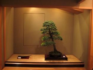 Morimae Bonsai shop