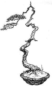 Bunjingi (literati) Bonsai style