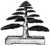 Chokkan (formal upright) Bonsai style