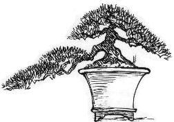 http://www.bonsaiempire.com/images/stories/style-han-kengai.jpg