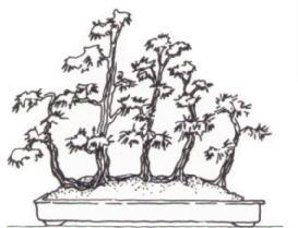 Ikadabuki (raft) Bonsai style