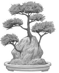 Ishisuki (growing on rock) Bonsai style