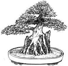 seki Joju (rock planting) Bonsai style
