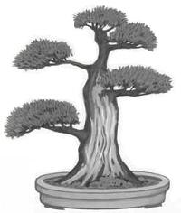 Sharimiki (deadwood) Bonsai style