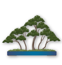Yose Ue (forest or group planting) Bonsai style