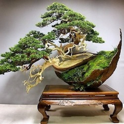 top10 bonsai