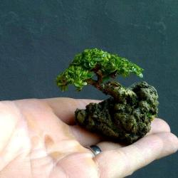 top10 smallest bonsai