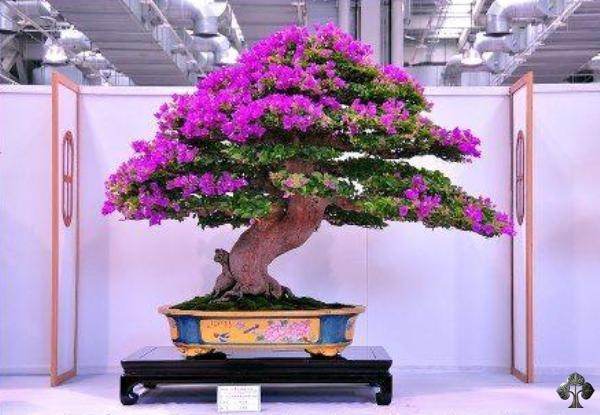top 10 most popular bonsai of the day bonsai empire. Black Bedroom Furniture Sets. Home Design Ideas
