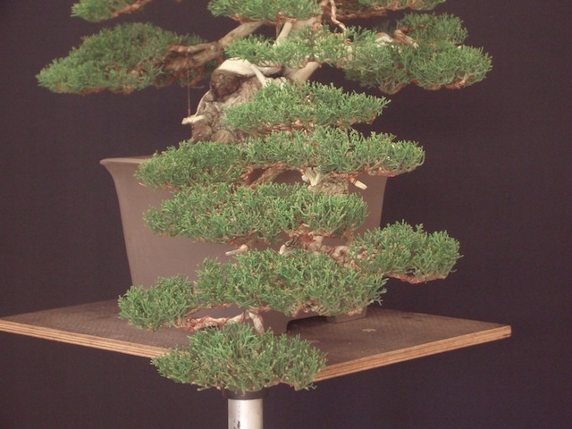 Wiring bonsai