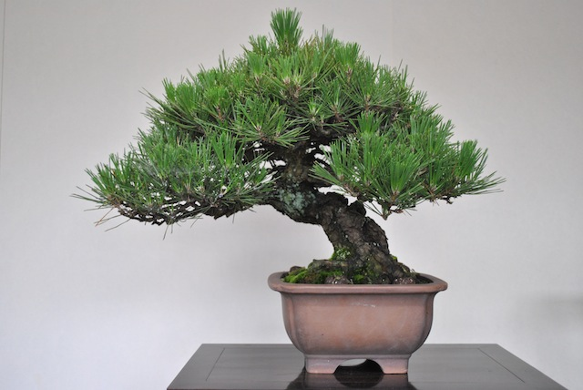 Incredible Advanced Wiring Bonsai Empire Wiring 101 Cajosaxxcnl