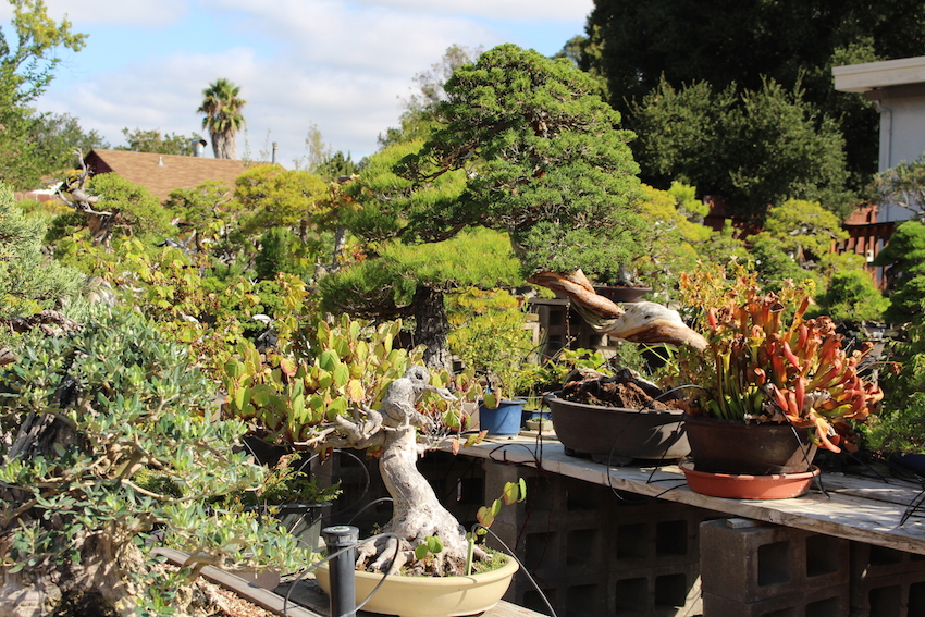 Bonsai boon's garden