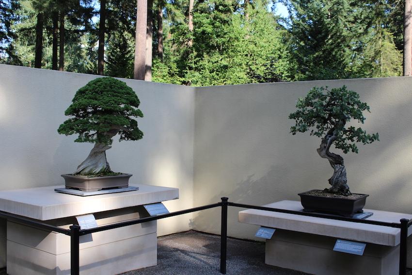 Pacific Bonsai Museum Bonsai Empire