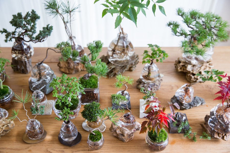 Aqua bonsai bonsai growing in water bonsai empire for Vater japones