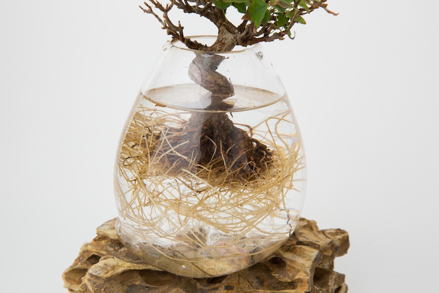 Aqua Bonsai creation