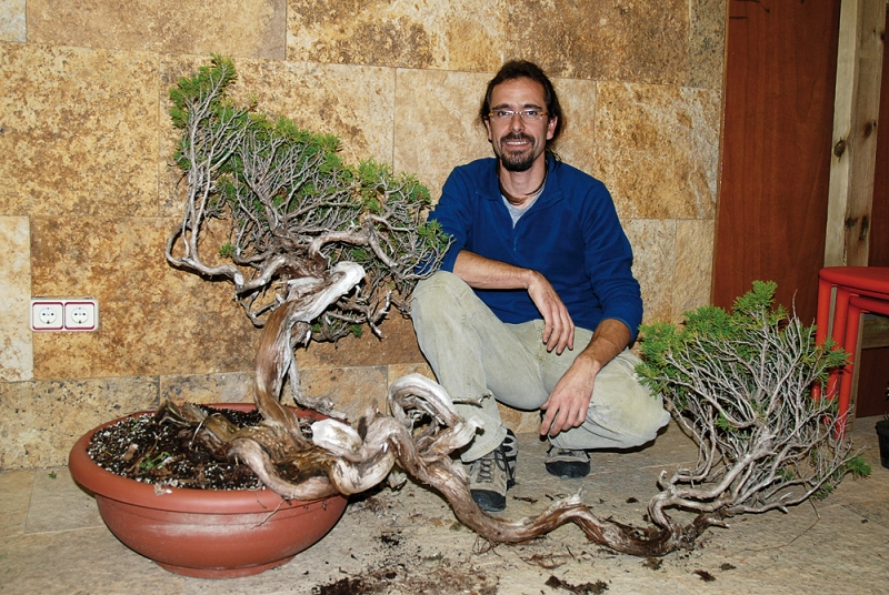 David Benavente bonsai