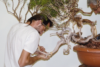 Bending Bonsai trunk