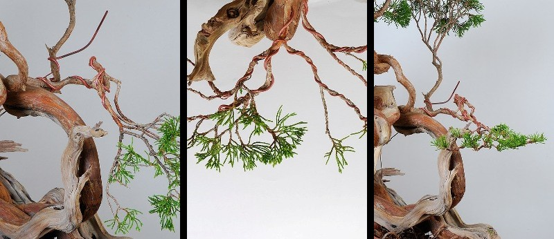 Wiring Bonsai, part 3