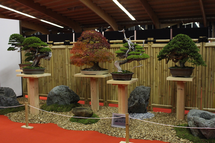 European Bonsai San exhibit