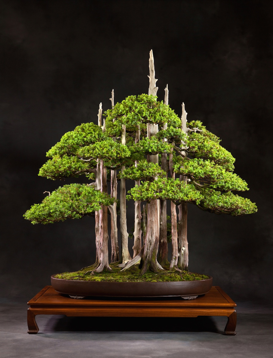 Us National Bonsai Goshin Bonsai Empire