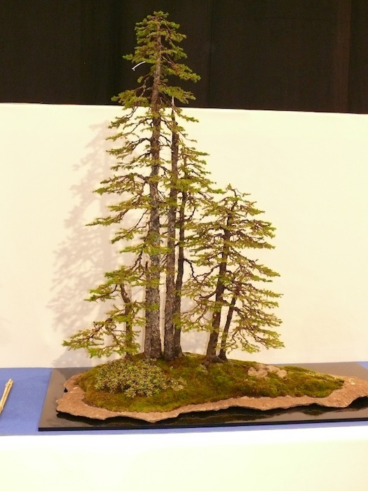 Spruce forest on a stone slab