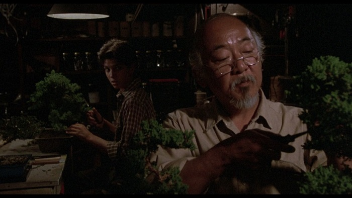 Bonsai In The Karate Kid Movie Bonsai Empire