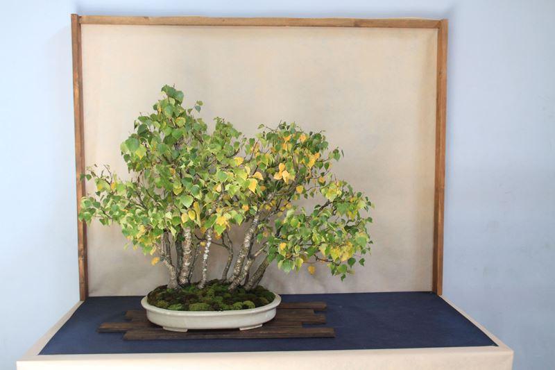 Summer bonsai festival italy bonsai empire for Unusual bonsai creations