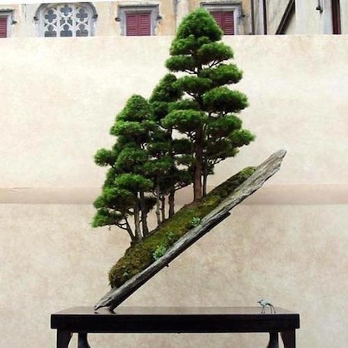 Top 8 Stunning Rock Bonsai Trees Bonsai Empire