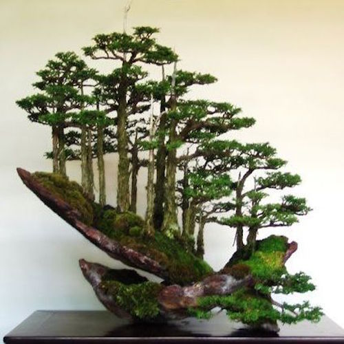 Top 8 Stunning Rock Bonsai Trees Bonsai Empire